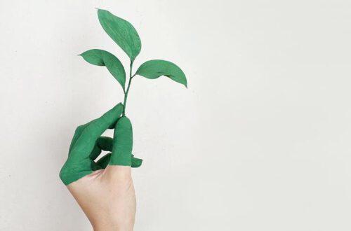 Wie Gehen Nachhaltiger Konsum Und Sparen Hand In Hand?