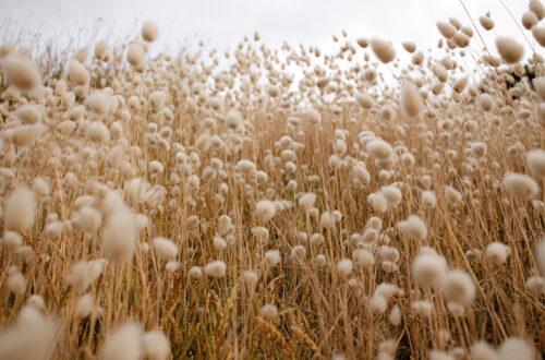 Symbolbild: Feld Mit Zahlreichen Gräsern